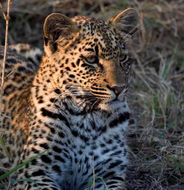 Arathusa Safari Lodge - Karula's cub